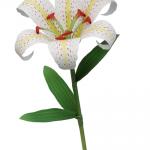 Цветы из бумаги своими руками - Лилия