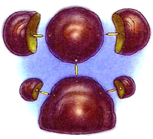Поделки из древесных грибов