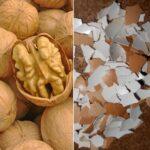 Поделки из скорлупы яиц и орехов своими руками